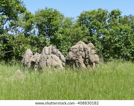 Mound-building termites are a specie that live in mounds. This group of termites live in Africa, Australia and South America. - stock photo