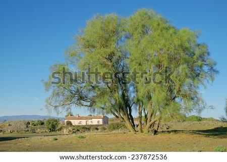 Mount Etna broom and refuge of Brooms Plain in Etna National Park, Sicily - stock photo