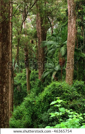 Mount Glorious, near Brisbane, Queensland, Australia - stock photo