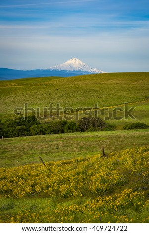 Mount Hood and spring flowers near the Columbia River Gorge - stock photo