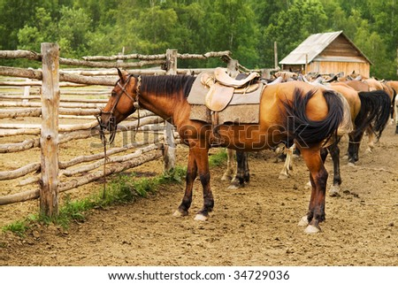 mount horses on the farm tethered to wood fence - stock photo
