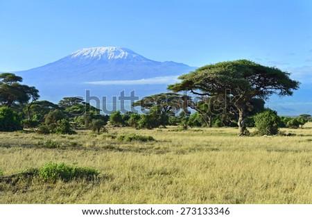 Mount Kilimanjaro in Kenya Amboseli National Park - stock photo