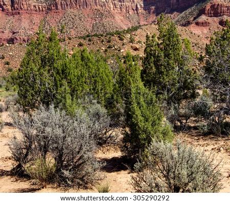 Mount Kinesava and desert brush rising from Chinle plateau near Zion National Park, Utah - stock photo