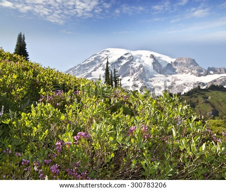 Mount Rainier and the wild flower - stock photo