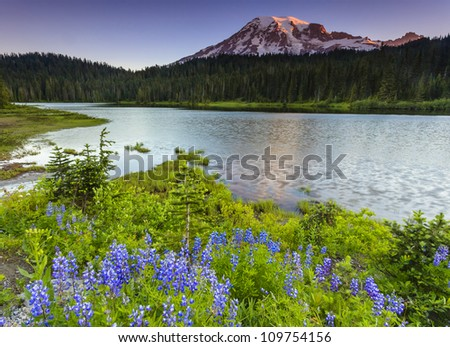 Mount Rainier morning with flowers - stock photo