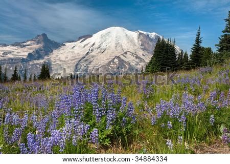 Mount Rainier National Park from Sunrise - stock photo