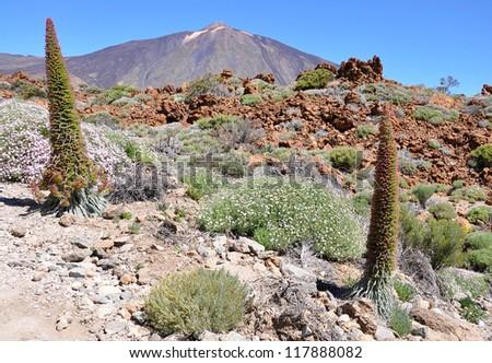 Mount Teide (3718m), Teide National Park, Tenerife, Canary islands, Spain - stock photo