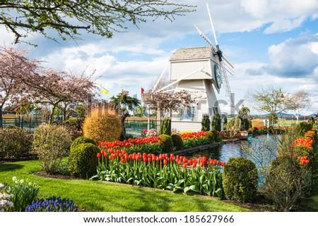 MOUNT VERNON, WA - APRIL 4: Tulip Town farm windmill display garden shown on April 4, 2014 during annual Skagit Valley Tulip Festival north of Seattle, Washington..  - stock photo