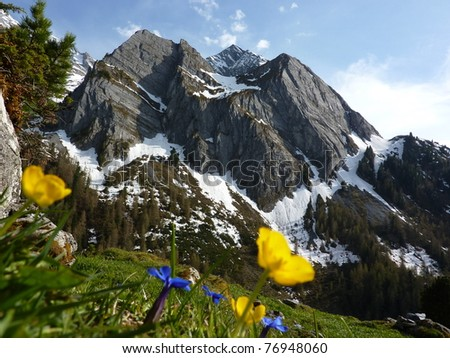 Mountain and flowers - stock photo
