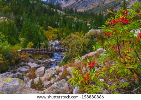 Mountain Ash and foot bridge on the Cascade Canyon hiking trail- Grand Tetons - stock photo