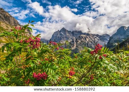 Mountain Ash growing near the hiking trail - Cascade Canyon Grand Tetons - stock photo