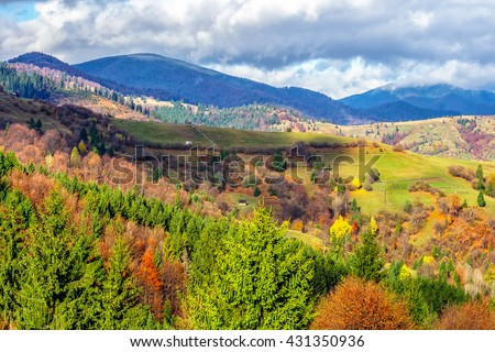 mountain autumn landscape. pine trees near valley and colorful forest on hill side in Carpathian Mountains under sky with clouds
