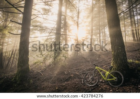 Mountain bike at sunrise in a redwood forest. - stock photo