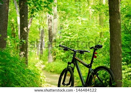 Mountain Bike on the Trail in the Beautiful Green Summer Forest - stock photo