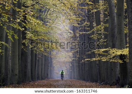Mountain biker, cyclist, speeding in beautiful symmetrical lane of trees in colored autumn wood, unrecognizable by motion blur, on Valkenberg estate in Breda, The Netherlands - stock photo