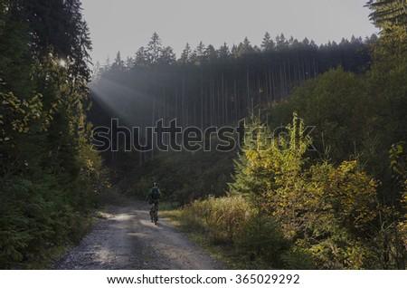 Mountain biker riding in autumn forest in sunlight - stock photo
