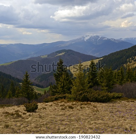 Mountain Carpathian landscape in spring with snowy peaks
