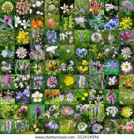 mountain & countryside flowers, 81 pictures - stock photo