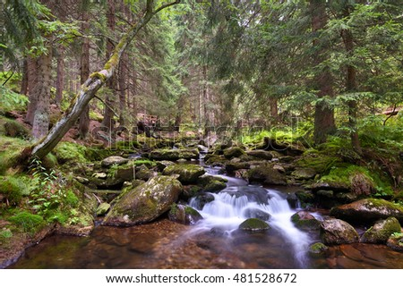 Mountain creek in the Krkonose national park forest, Czech Republic