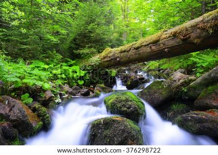 Mountain creek in the national park Sumava-Czech Republic - stock photo