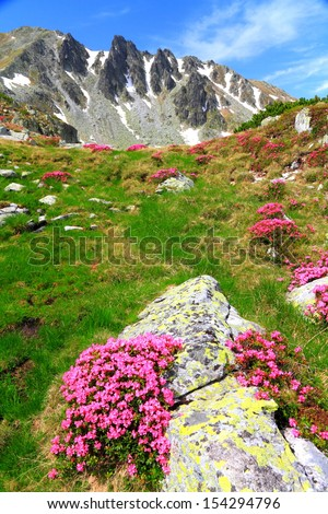 Mountain flowers on the rocky slopes in sunny day - stock photo