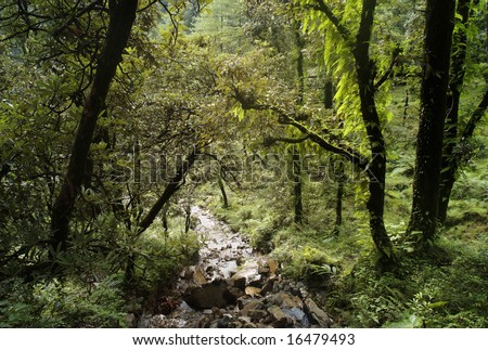 mountain forest at Dharamsala, India