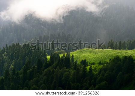 Mountain forest. Beautiful mountain forest landscape. Mountain forest before storm. Amazing mountain forest. Mountain forest in clouds.  Sochi, Russia. - stock photo