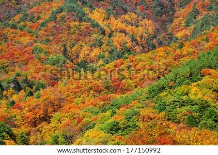 Mountain forest in Autumn - stock photo