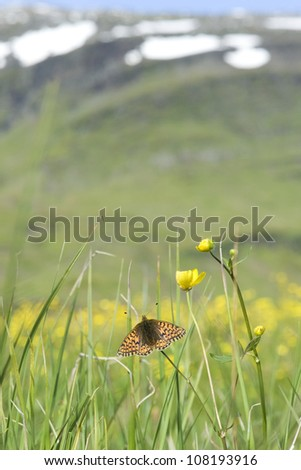 Mountain Fritillary (Boloria napaea) adult, Kungsleden, Lapland, Sweden - stock photo