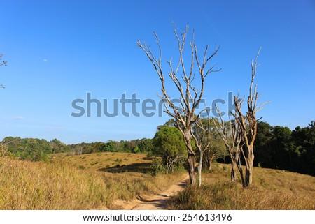 Mountain grass - stock photo