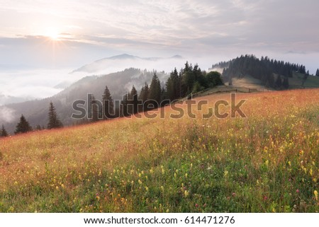 Mountain hills and meadows at summer sunny day
