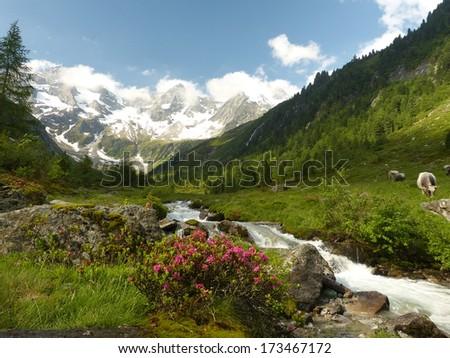 Mountain idyll in Austria - stock photo