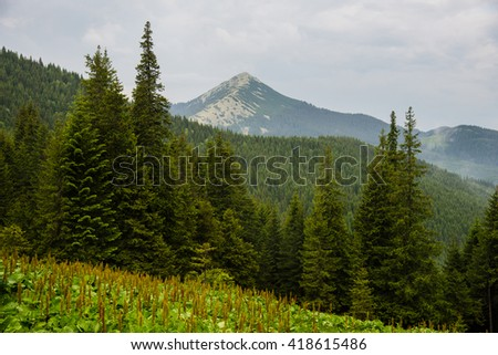 Mountain in Gorgany. Carpathian national natural park, in the Nadvornyansky region of the Ivano-Frankovsk area - stock photo