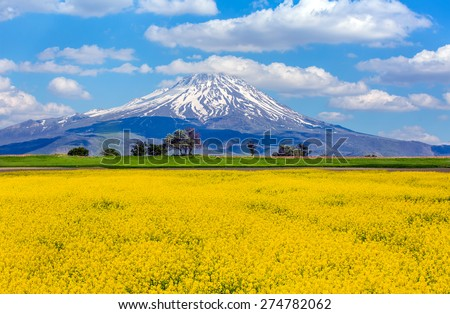 Mountain landscape and yellow wild flowers - stock photo