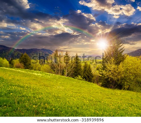 mountain landscape in summer time. rainbow above meadow with fresh green grass and dandelions near the mixed forest on hillside in high mountains at sunset