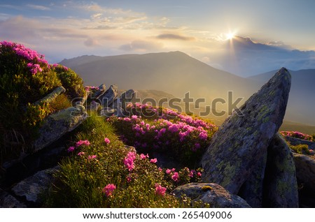 Mountain landscape. Sunlight. Rhododendron flowers. Beauty in nature - stock photo