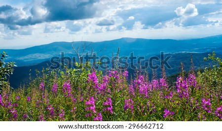 Mountain landscape with a willow-herb, Carpathians, Ukraine - stock photo