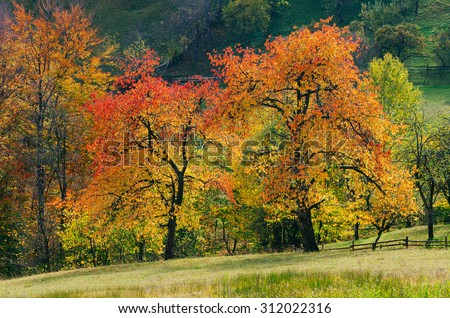 Mountain landscape with autumnal trees. The natural beauty of the village - stock photo