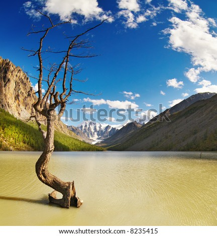 Mountain landscape with lake and dead tree - stock photo