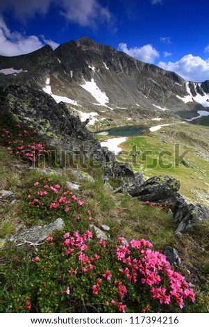 Mountain landscape with red flowers (rhododendron), Retezat National Park, Romania - stock photo