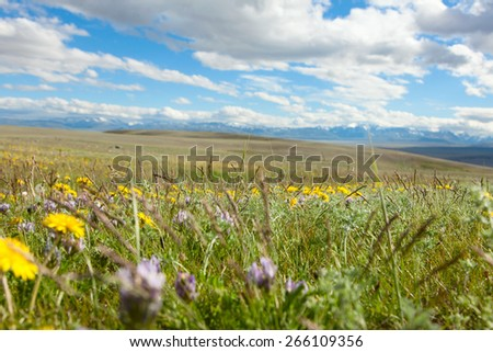 Mountain meadow clear summer day - stock photo