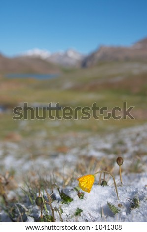 Mountain meadow in the morning after heavy snow 2 - stock photo
