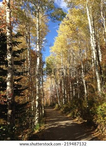 Mountain path in the Fall.  - stock photo