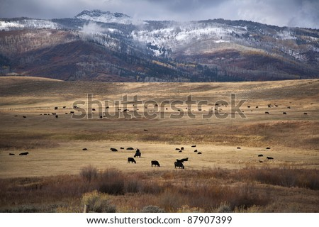 Mountain ranching operation with cattle - stock photo