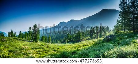 stock-photo-mountain-range-and-evergreen