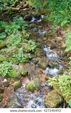 Mountain river flowing through the green forest. Stream in the forest/Beautiful mountain river running down a rocky bed in a forest of green. Summer view with clean water  - stock photo