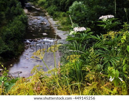 Mountain river flows in the gorge, overgrown with forest - stock photo