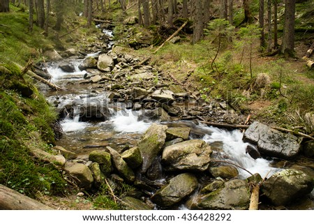 Mountain river in a forest.