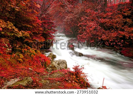 mountain river in a forest, Austria - stock photo