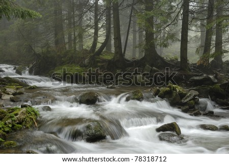mountain river in Carpathian forest - stock photo